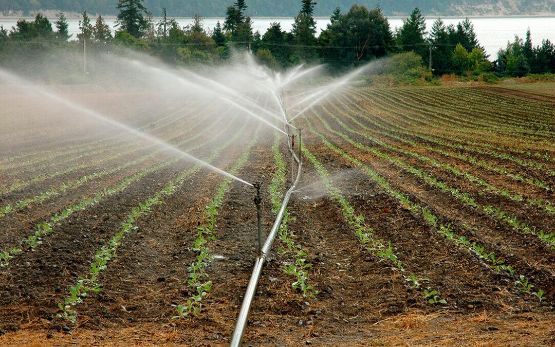 Las aguas regeneradas de la EDAR de Vélez-Málaga regarán 2.700 hectáreas de cultivos