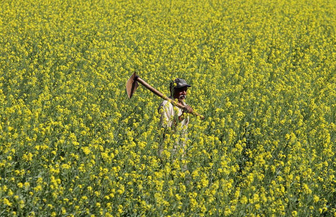 Proponen que no se autorice la liberación voluntaria ni la comercialización de los OMG sin protocolos de vigilancia previos