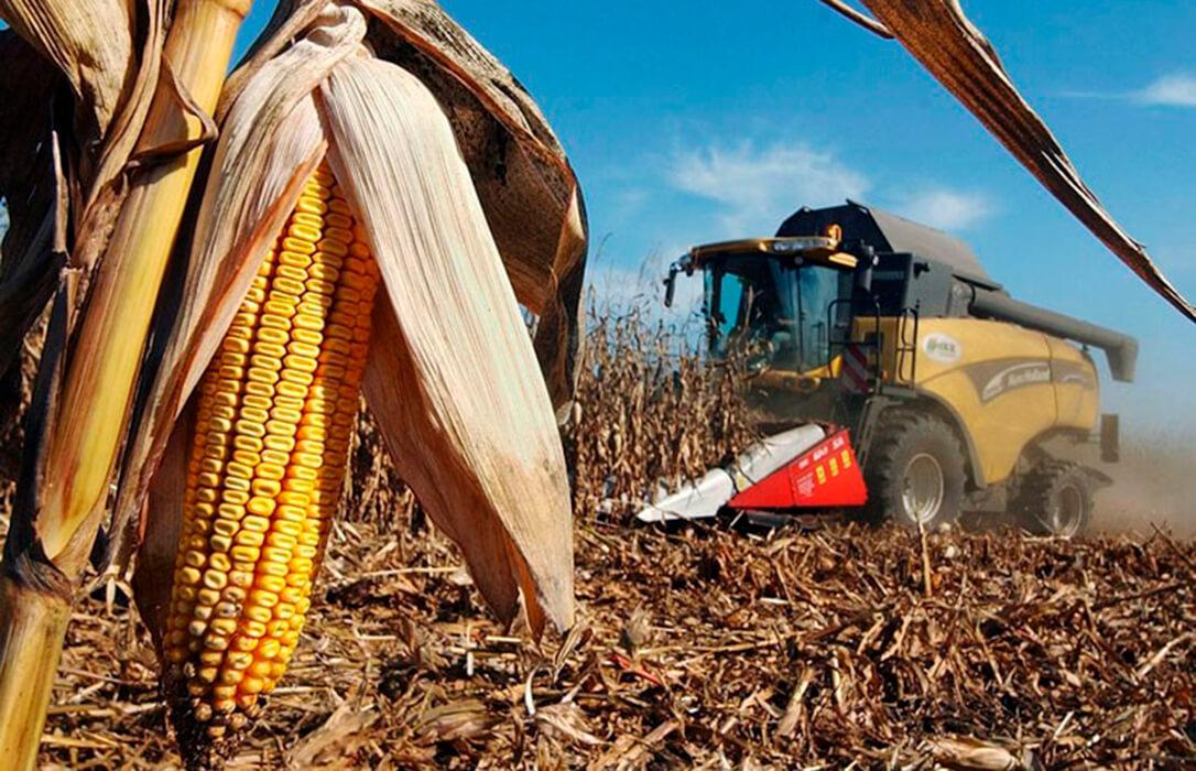 Nueva semana de subidas generalizadas en la Lonja de León, con el maíz como protagonista
