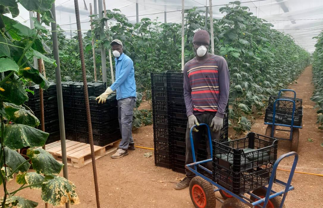El Gobierno acuerda con empresarios, organizaciones agrarias y sindicatos coordinar la migración en el campo