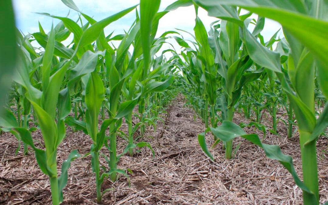 Consideran un lastre para el sector el proyecto de nutrición de suelos y piden esperar a que se poga en marcha el ecoesquema