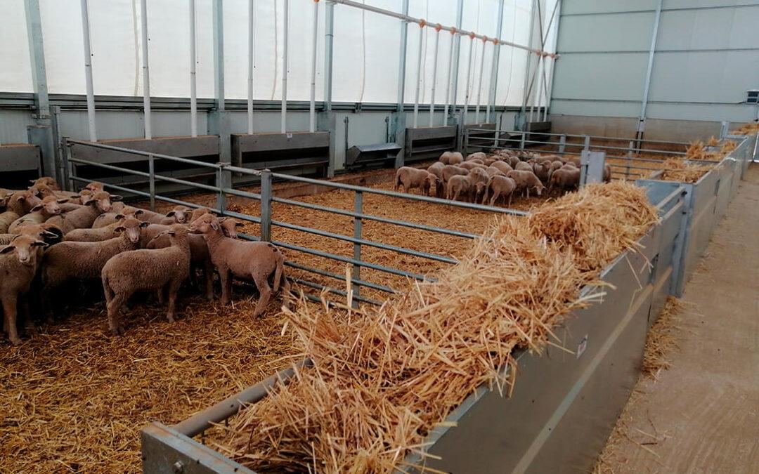 El CAAE emite el primer certificado al centro de tipificación de ovino ecológico de CorSevilla