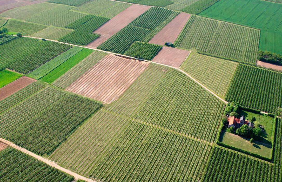 Planas no convence al sector de los beneficios de la PAC, que acepta ir por «caminos verdes, pero no tan viscerales»