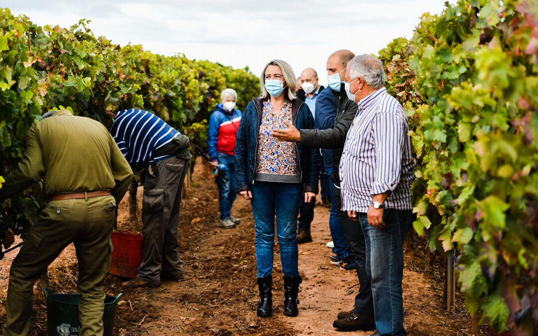 La crisis de precios de la uva golpea a La Rioja: Se vendimia sin contratos formalizados, sin precio o se debe vender de forma desleal
