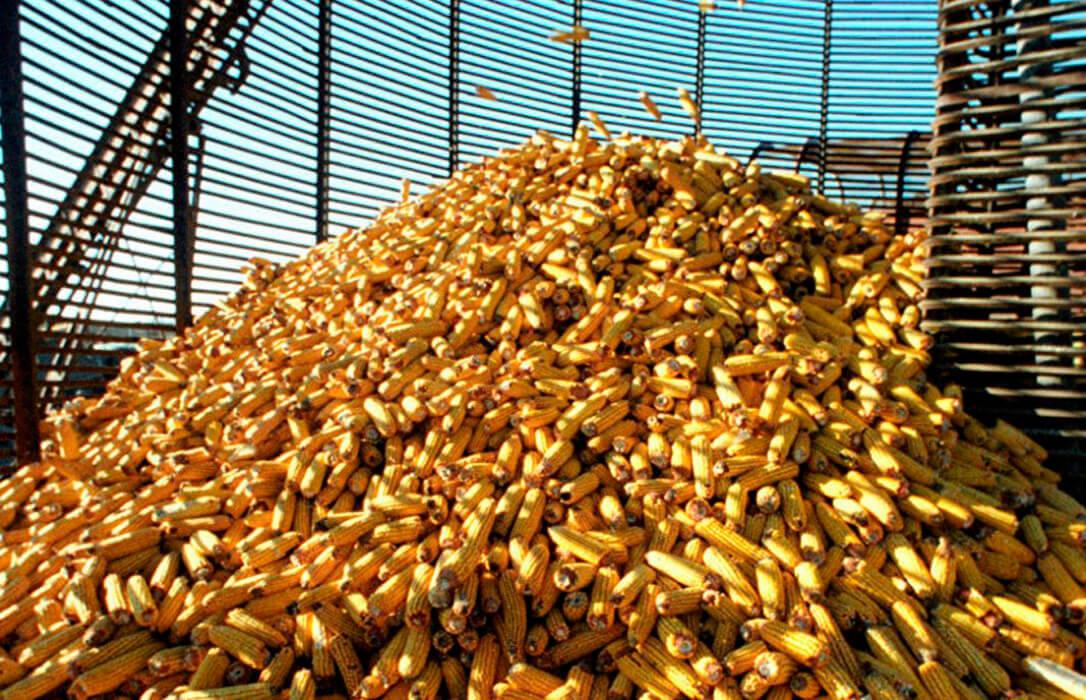 Los precios mayoristas de los cereales se disparan: El maíz ya cotiza por encima de los 200€ y la cebada de malta sube 15 en siete días