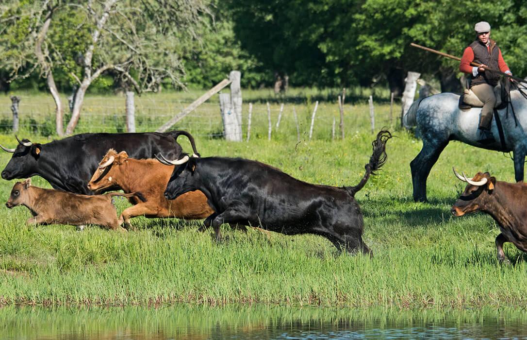 El sector del toro de lidia recurrirá al Tribunal Europeo si se aplican al final la retirada de las ayudas de la PAC