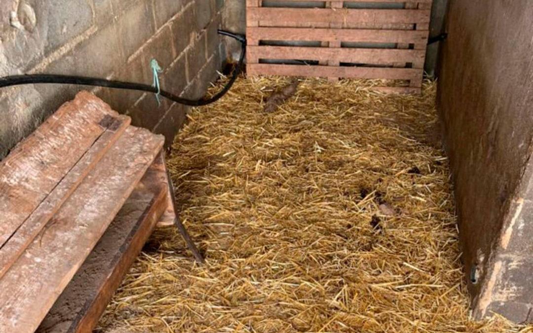 Aprovechan el toque de queda para robar 10 de los 13 corderos de una explotación ovina de Salamanca