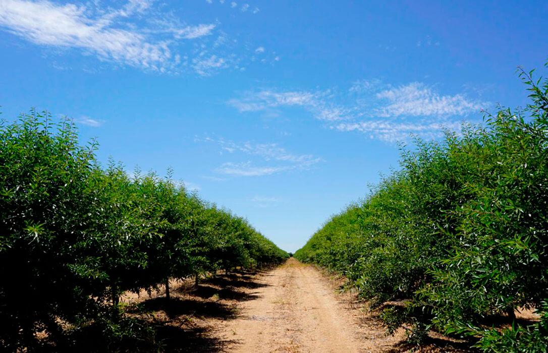 Calculan el consumo de agua de los árboles para diseñar sistemas de riego de precisión