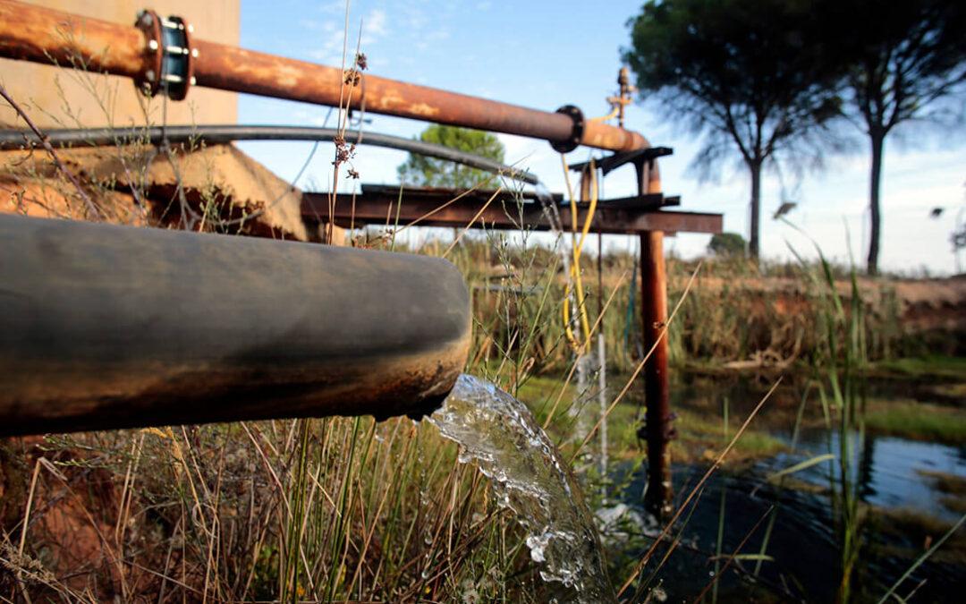 Hasta el agua de lluvia para riego es ilegal: El Supremo considera un «ejercicio abusivo» recoger este agua de lluvia en Doñana