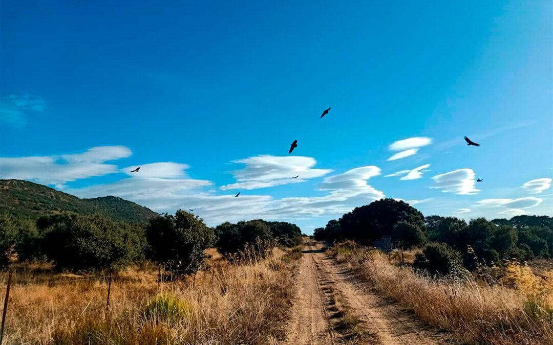 Los buitres se asientan en Salamanca y amplían su campo de acción atacando a varias explotaciones de ganado en un mismo pueblo