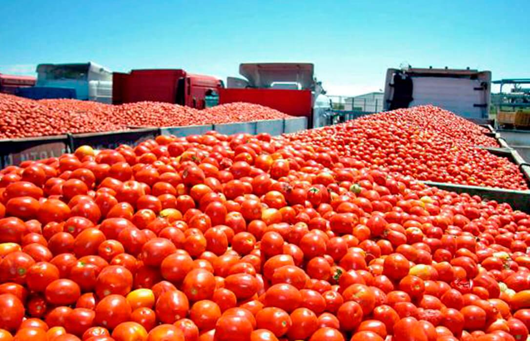 La CE tendrá que posicionarse por el posible fraude en la indicación de origen de productos hortofrutícolas marroquíes