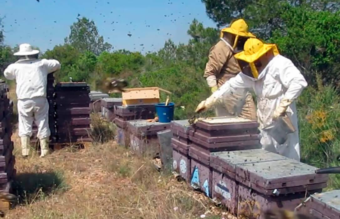 La Comunidad Valenciana se convierte por decreto en territorio hostil para las abejas con su Ley de Ganadería contra el sector apícola