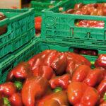 COEXPHAL-APROA aprueba solicitar la extensión de norma en el seno de Hortyfruta ante la crisis de precios en el sector