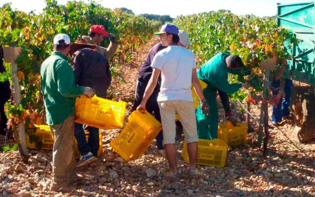 MAPA eleva del 10 al 12,5% el contenido mínimo de alcohol de los subproductos del vino para el programa de apoyo