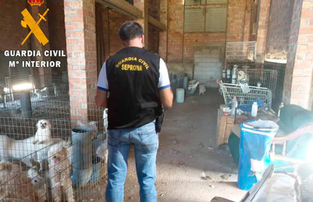 Brutalidad animal: Un detenido por tener criadero ilegal de perros y cortarles las cuerdas vocales para que no ladraran y le delataran