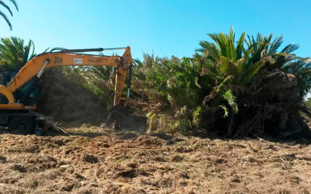 Se declara el decimotercer brote de Xylella en la Comunitat Valenciana y los vegetales afectados deberán eliminarse en quince días