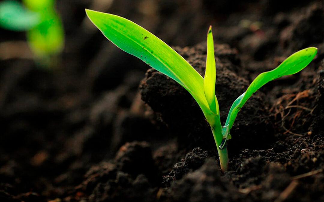 Fertiberia, premiada por la Asociación Internacional de Fertilizantes por su compromiso con la Seguridad, la Salud y el Medio Ambiente