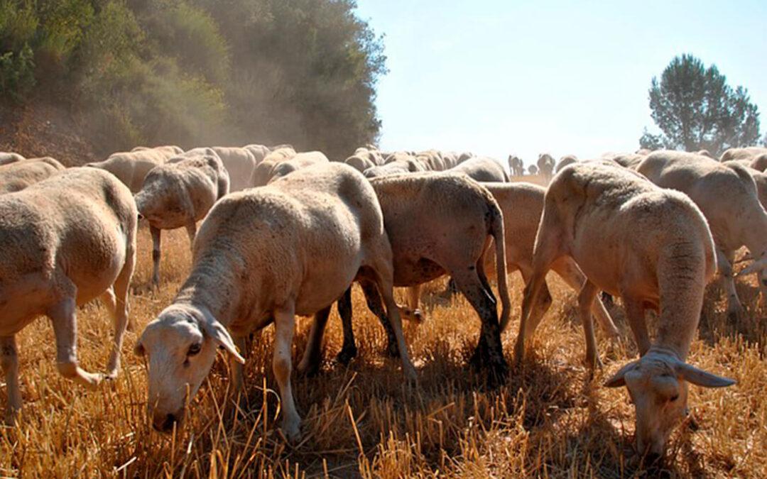 La gran estafa en la PAC: 50 millones en pagos ilegales en tres CCAA vinculados al pastoreo y la fertilización de pastos