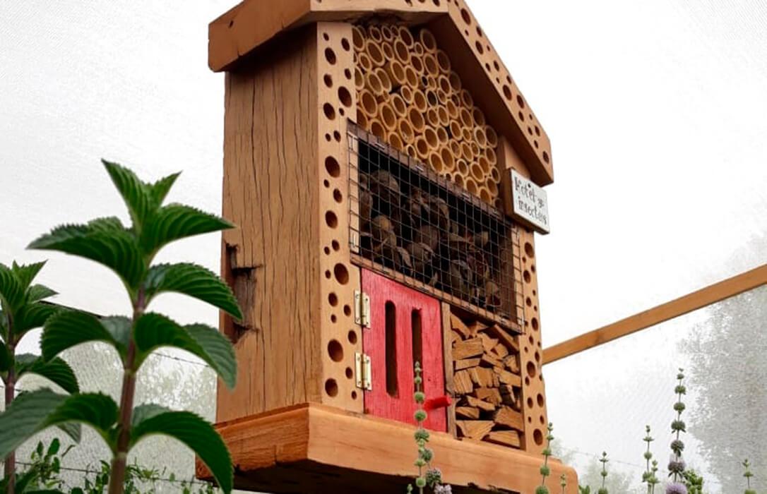 Experiencia piloto: Un Hotel de insectos para cobijar a insectos para el control natural de plagas