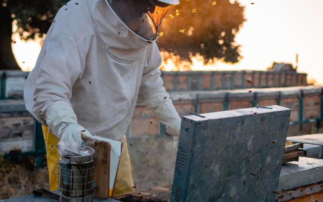 'La abeja es vida': La lucha de sector y empresas por salvar la apicultura nacional desde la Comunitat Valenciana