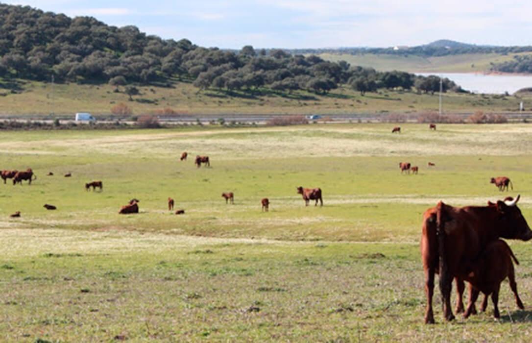 Denuncian que la ganadería extensiva seguirá siendo víctima con la nueva PAC y exigen cobrar lo mismo que los agricultores