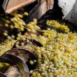 El vino es salud… y dinero: El sector vitivinícola español genera casi 24 mil millones anuales, un 2,2% del Valor Añadido Bruto nacional
