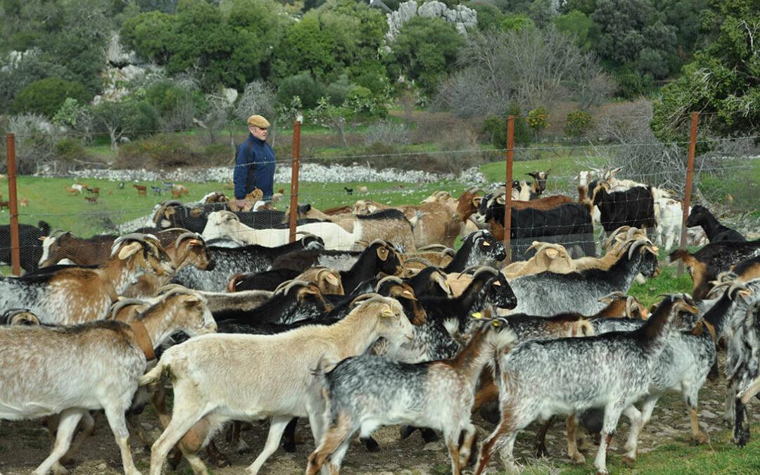 El pastoreo extensivo será el primer ecoesquema que propondrá el Gobierno para el cobro del 20% de las ayudas de la PAC