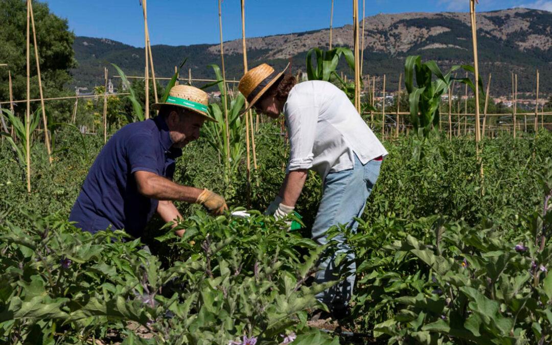 La CE amplía los plazos de entrega de los datos agrícolas de la PAC mientras que Madrid adelanta el 70% del pago al sector