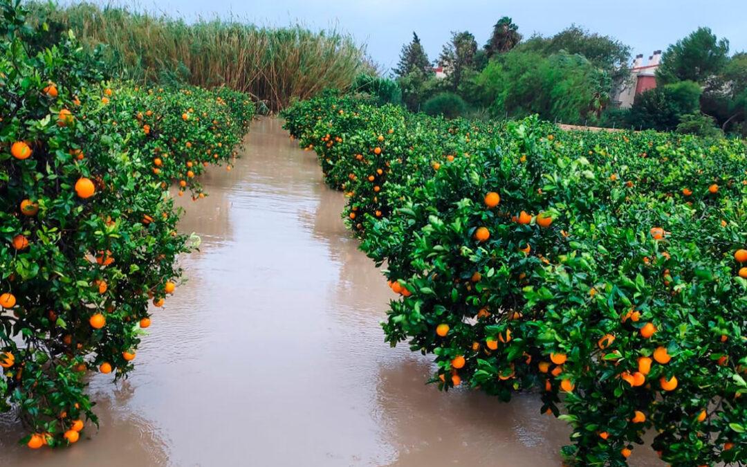 Llueve sobre mojado: La gota fría provoca 62 millones de pérdidas de cosechas, sobrecostes e infraestructuras en la agricultura valenciana
