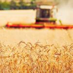 El precio de los cereales parece estabilizarse con una perspectiva levemente alcista en la Lonja de León