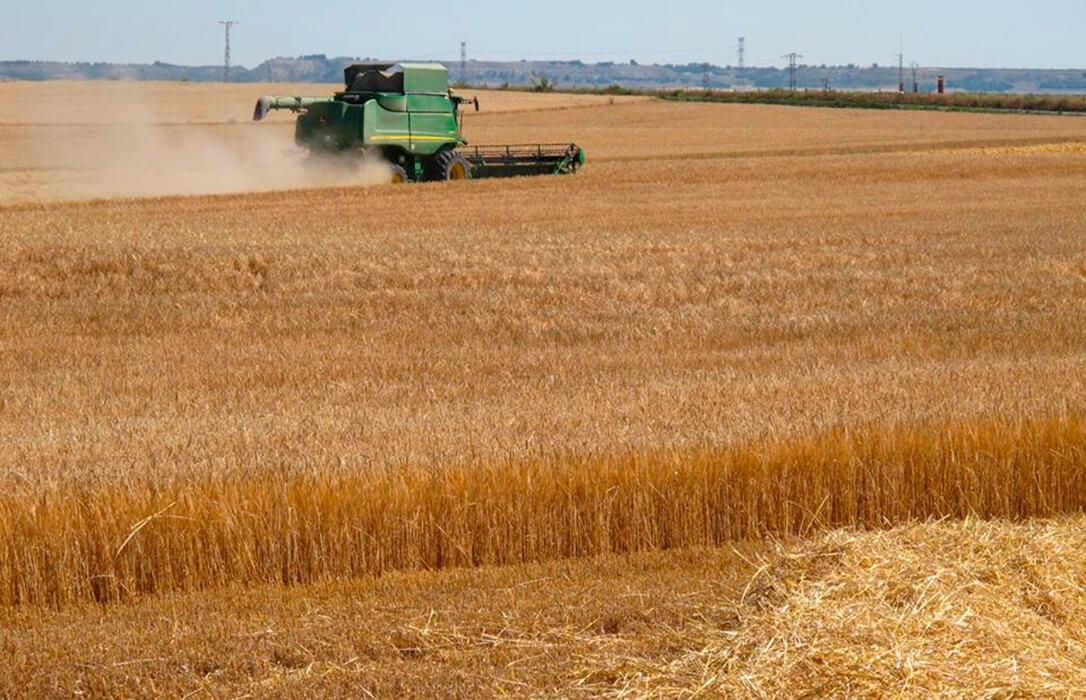 La tendencia vuelve a virar a favor de los agricultores y regresan las subidas generalizadas al cereal salvo en la avena y cebada