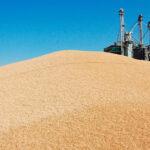 Siguen las subidas de los precios de los cereales en los mercados mayoristas aunque con un tono moderado