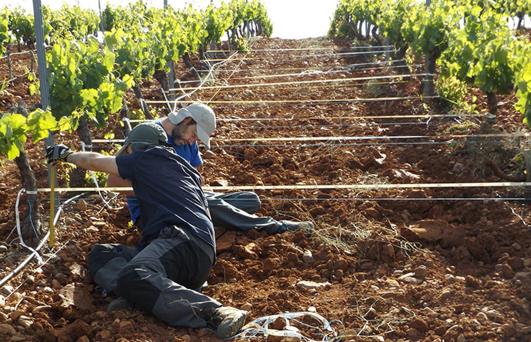 Respaldo a los presupuestos de Agricultura en Andalucía pero si van acompañados de hechos y una mejor gestión