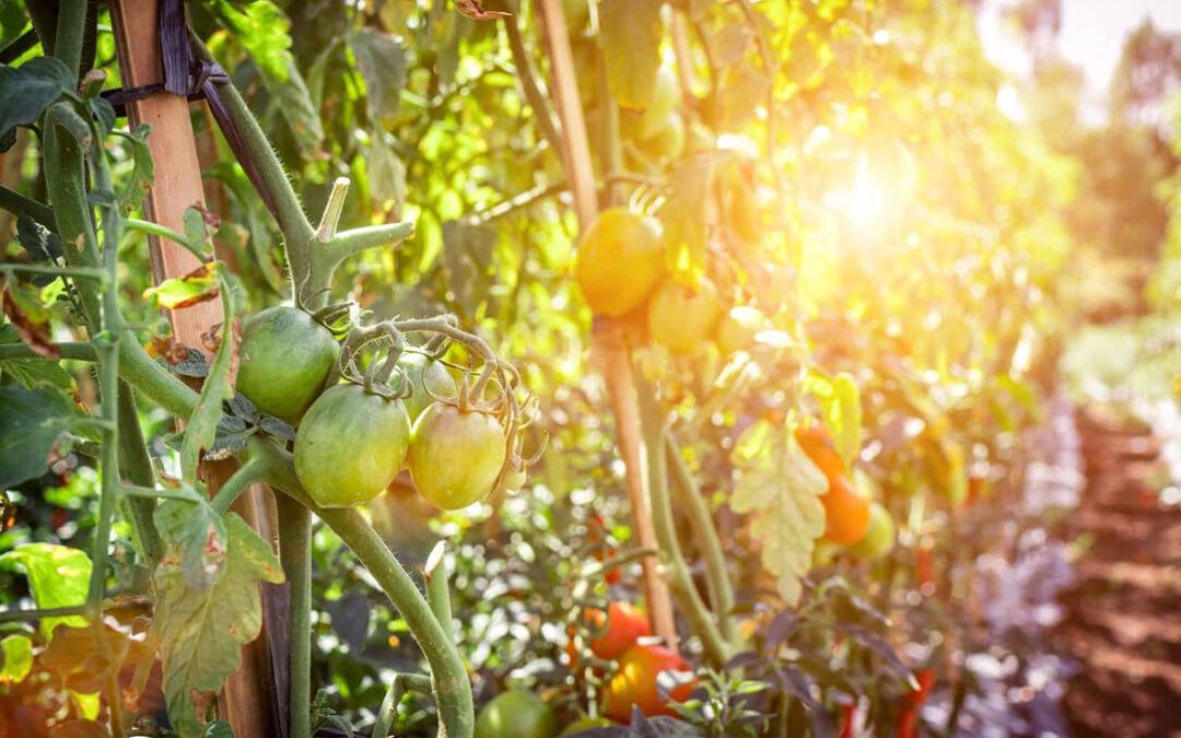 Nace Proyecto Kulto, la plataforma que conecta a agricultores ecológicos y usuarios de proximidad e impulsa el consumo sostenible