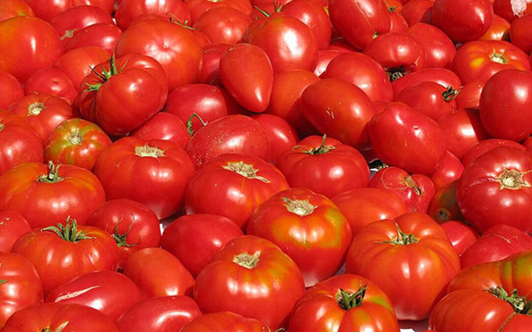 Europa sabe exigir al campo pero no cumplir con lo que reclama: La UE compra más tomate marroquí que español