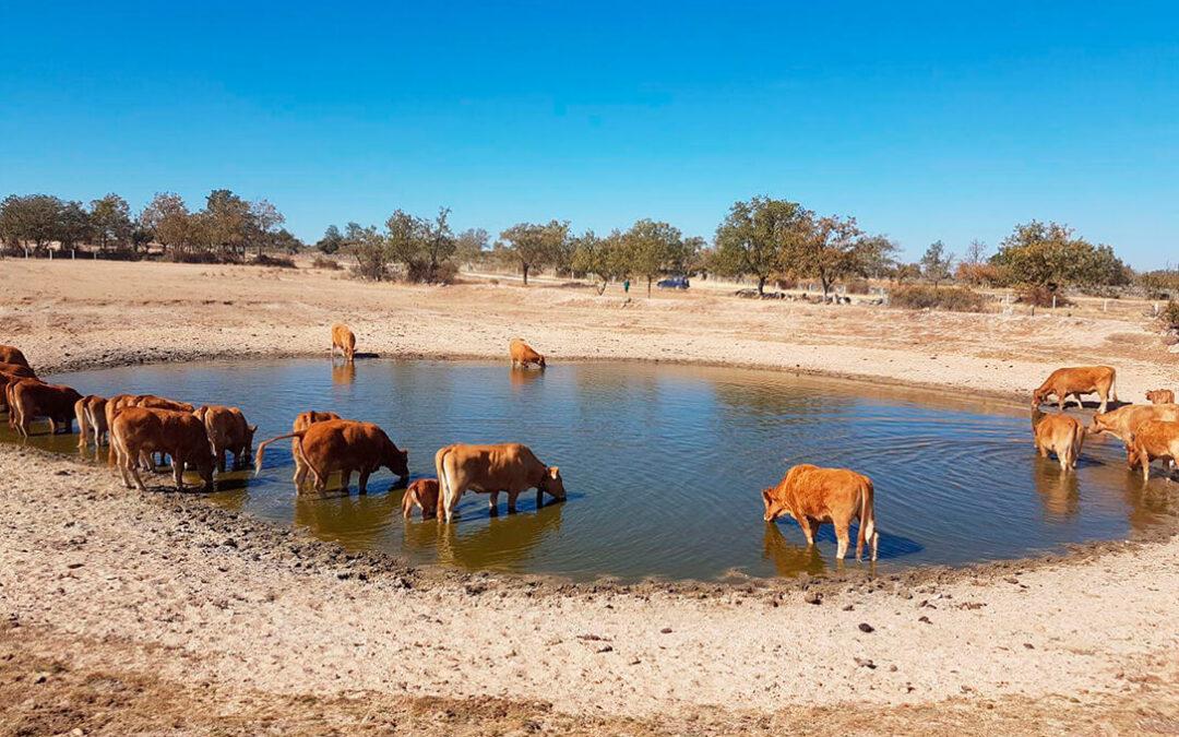 Balance climático de AEMET: Noviembre ha sido el mes más cálido de la última década aunque normal en cuanto a precipitaciones