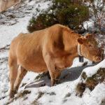 Las cabañuelas anuncian un primer trimestre lluvioso y con nieve, arrancando con frío a finales de enero 1