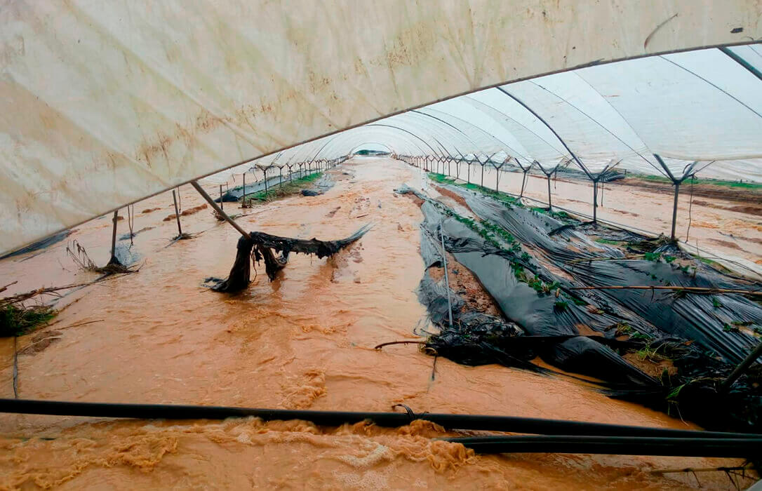 Propuesta para que se tengan en cuenta los costes de producción al contratar un seguro agrario