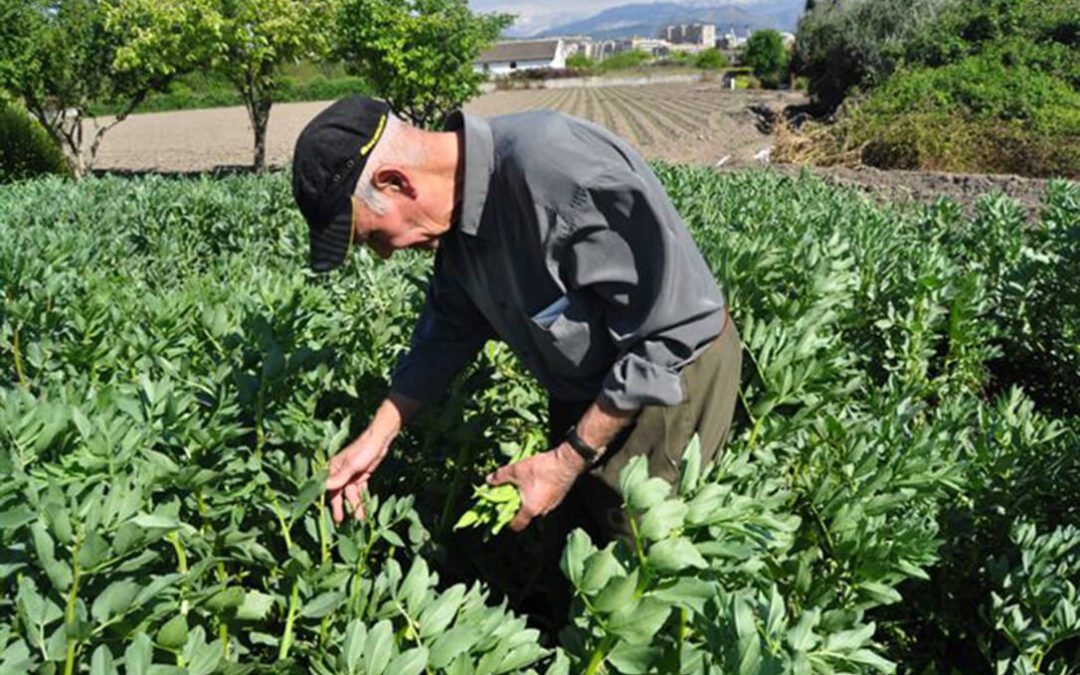 El Parlamento Europeo reconoce que el sector agrario no tiene fácil cumplir con el Pacto Verde
