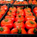 Un respiro y un ahorro: El acuerdo UE-Reino Unido evitará pagar 198 millones en aranceles a las frutas y verduras españolas 1