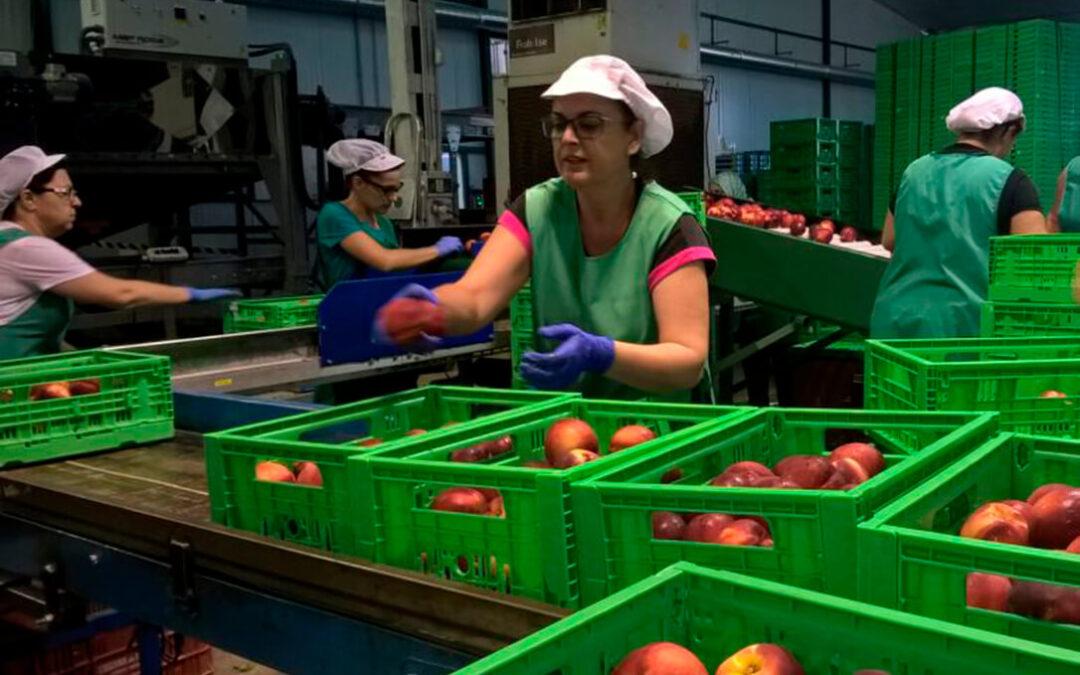 La exportación hortofrutícola cerrará con 14.200 millones, en un año marcado por la Covid, el Brexit y la competencia de terceros países