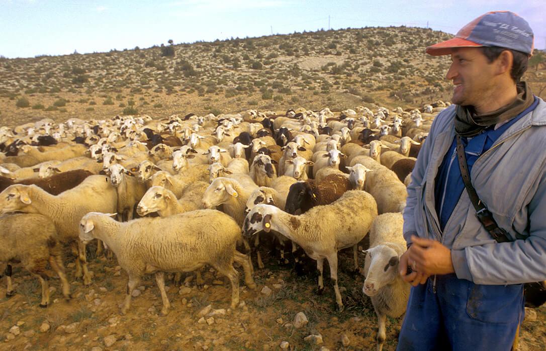 Aprobadas las extensiones de norma para los sectores cunícola y de ovino-caprino