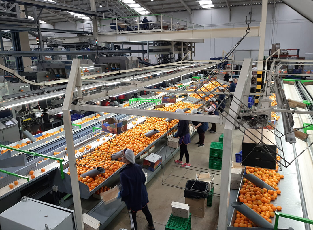 Las huelgas y paros laborales sacuden a un sector agrario que considera «irresponsable» estas protestas en este momento