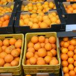 Perjuicio a los productores: Denuncian un gran número de incumplimientos en la campaña citrícola para dejar los precios por debajo de costes 1