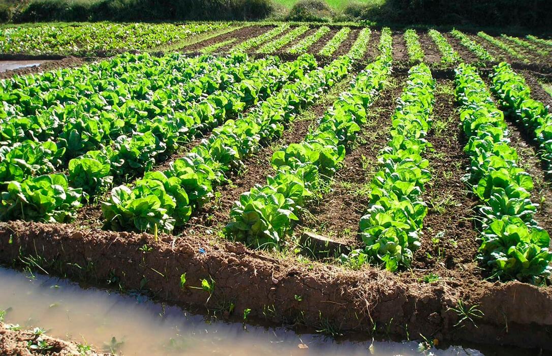 Proponen que los nuevos contratos de agricultura ecológica, previstos para 3 años, no computen a efectos de reducciones