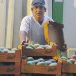 El mango de Perú apuesta por ordenar más su oferta y crear una marca de calidad con la vista puesta en EEUU 1