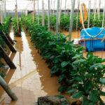 El Gobierno aprueba Plan Seguros Agrarios Combinados 2021 con varias novedades y 40 millones más de presupuesto 1