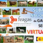 Feagas pone en marcha el sistema de subastas virtuales para las razas puras como alternativa a las suspensiones por el Covid 1