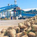 Las siembras de remolacha en el sur, tanto de secano como de regadío, van a buen ritmo y ya superan las 8.100 hectáreas
