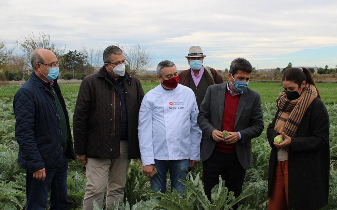 La Vega Baja comienza su temporada de alcachofas con optimismo y esperanza tras el desastre de la DANA